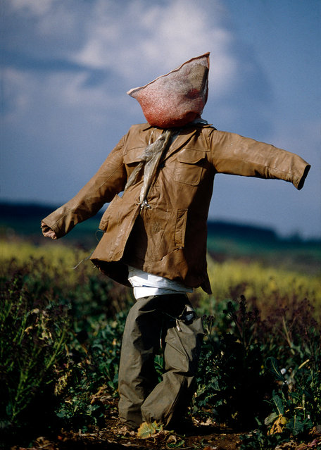 "When Colin Garratt went to photograph the traditional sentinels of the British countryside, he found they ranged from the dapper to the downright sinister. ""They are not from the anaesthetised world of the craft fair"", says Colin Garratt, ""but are the direct descendants of the ancient spectres which have haunted the landscape for centuries"". The Scarecrow Exhibition is at Geddes Gallery, London, from 25 to 30 March. (Photo by Colin Garratt)"