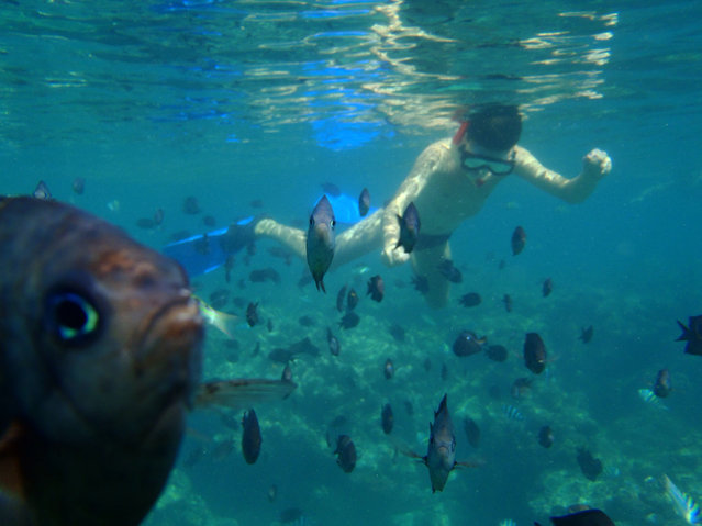 """Photo bombed by a reef fish; Snorkelling in Vanuatu"". (Photo by Rachel Joanne)"
