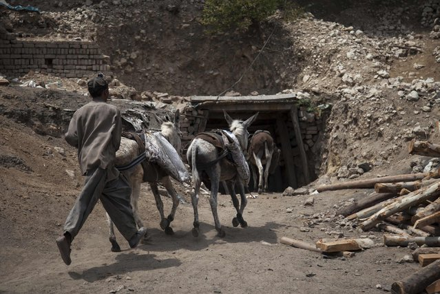 A young miner rushes his donkeys back into the coal mine in Choa Saidan Shah in Punjab Province May 5, 2014. (Photo by Sara Farid/Reuters)