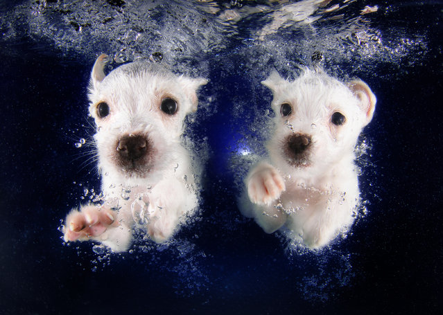 """Underwater Puppies"": Pringles and Pickme. (Photo by Seth Casteel)"