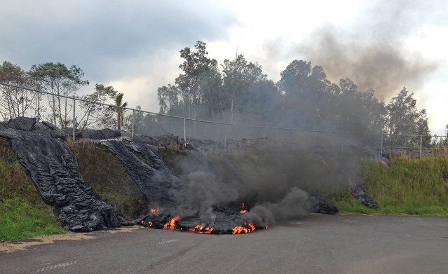 In this photo taken Tuesday, November 11, 2014, and provided by the U.S. Geological Survey, lava flow from the Kilauea Volcano that began on June 27 pushes its way through a fence of a now-closed refuse transfer station and moves down the slope onto station grounds in Pahoa, Hawaii. The flames are caused by burning asphalt. (Photo by AP Photo/U.S. Geological Survey)
