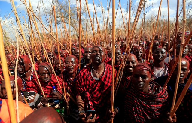 Maasai men of Matapato attend the Olng'esherr (meat-eating) passage ceremony to unite two age-sets; the older Ilpaamu and the younger Ilaitete into senior elder-hood as the final rite of passage, after the event was initially postponed due to the coronavirus disease (COVID-19) outbreak in Maparasha hills of Kajiado, Kenya September 23, 2020. Around 15,000 men from all over Kenya and neighboring Tanzania congregated in Maparasha Hills in Kajiado County, 128 km from Nairobi, to feast on an estimated 3,000 bulls and 30,000 goats and sheep. (Photo by Thomas Mukoya/Reuters)