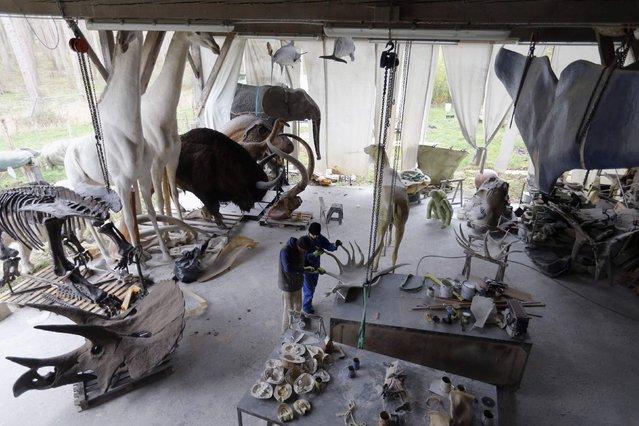 Workers work on animal replicas in the workshop of Belgian animal sculptor Emmanuel Janssens Casteels, in Prayssas December 3, 2014. (Photo by Regis Duvignau/Reuters)
