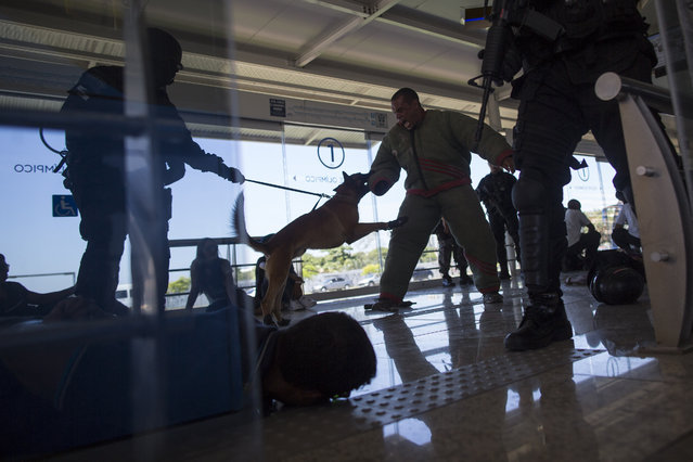A police dog attacks a man playing the role of a criminal during a security drill in a BRT Transcarioca (Rapid Transit Bus) station in Rio de Janeiro, Brazil, Wednesday, February 11, 2015. Special operations battalion, BOPE, police officers and dog units participated in a security drill simulating a hostage situation in preparation for the Rio 2016 Olympics. (Photo by Felipe Dana/AP Photo)