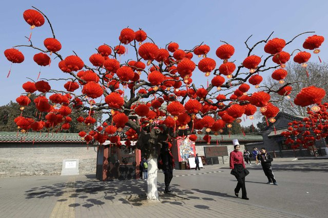 Red lantern decorations are installed on a tree for the upcoming Spring Festival celebrations in a temple fair at a park in Beijing February 13, 2015. (Photo by Jason Lee/Reuters)