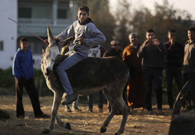 In this Friday, February 5, 2016 picture, villagers gather to watch Ahmed Ayman, 14, and his donkey as they jump over a barrier in the Nile Delta village of Al-Arid about 150 kilometers north of Cairo, Egypt. (Photo by Amr Nabil/AP Photo)