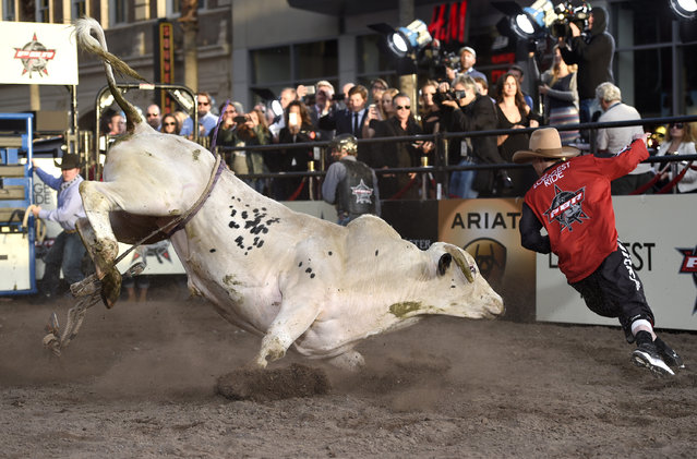 "A professional bull rider participates in a bull riding exhibition at the premiere of ""The Longest Ride"" at the TCL Chinese Theatre on Monday, April 6, 2015, in Los Angeles. (Photo by Chris Pizzello/Invision/AP Photo)"