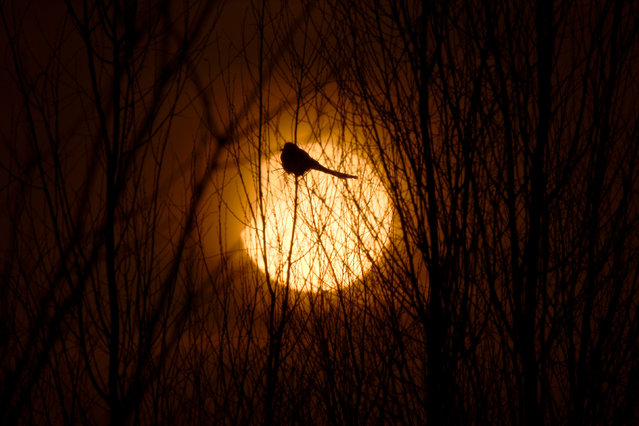 A partial solar eclipse is seen through a silhouette of a bird sitting on tree branches in Yinchuan, Ningxia Hui Autonomous Region, China January 6, 2019. (Photo by Reuters/China Stringer Network)