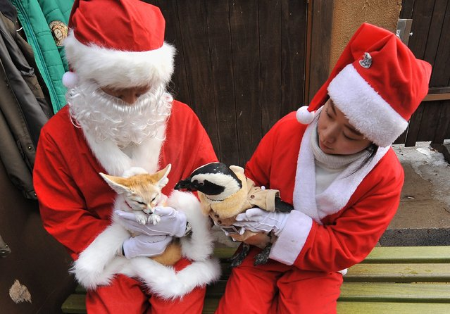 Trainers dressed Santa Claus costumes take care of a penguin (R) and a fennec fox (L) dressed in costumes for a promotional event at an amusement park ahead of Christmas in Yongin, south of Seoul, on December 18, 2013. (Photo by Woohae Cho/AFP Photo)