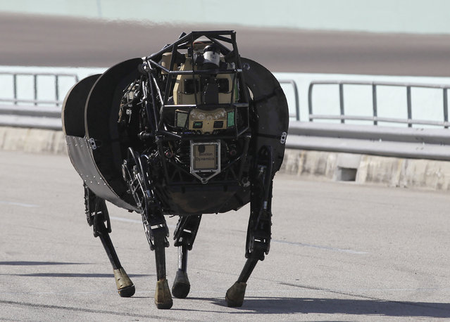 An LS 3 (Legged Squad Support System) robot demonstrates its movement, showing it is designed to accompany soldiers and Marines any place they go on foot, helping to carry their gear, during a demonstration in Homestead, Florida December 20, 2013