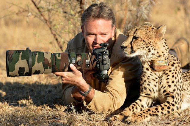 Photographer Chris Du Plessis and Mtombi the Cheetah reviewing the photos. (Photo by Chris Du Plessis/Caters News)