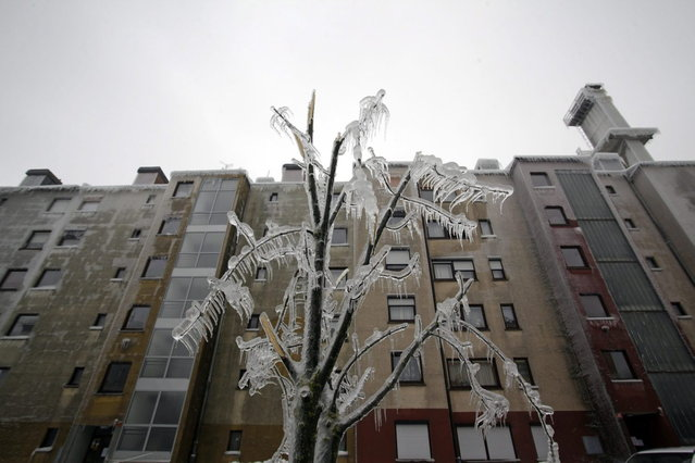 An ice-covered broken tree is seen in front of a building in Postojna February 5, 2014. (Photo by Srdjan Zivulovic/Reuters)