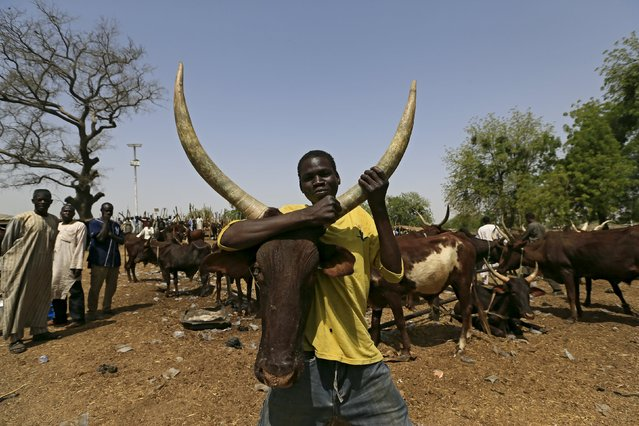 A man holds a cow at the cattle market in Maiduguri, Nigeria, March 9, 2016. (Photo by Afolabi Sotunde/Reuters)