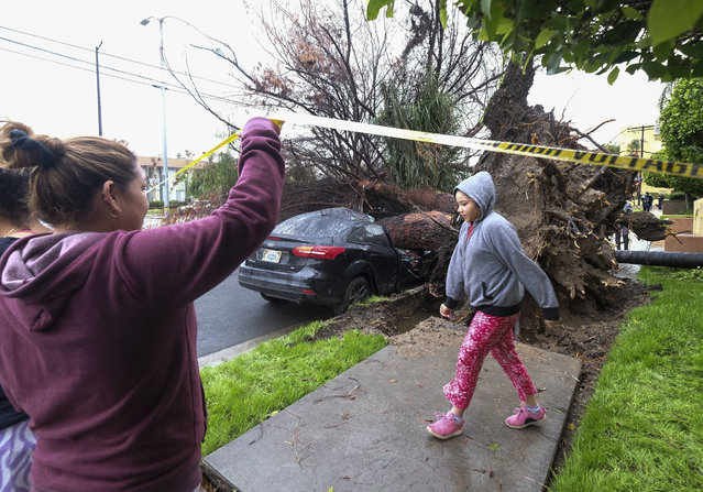 Neighbors walk by a fallen tree that crused a car Saturday, February 18, 2017, in Sherman Oaks section of Los Angeles. A huge Pacific storm parked itself over Southern California and unloaded, ravaging roads and opening sinkholes. (Photo by Ringo H.W. Chiu/AP Photo)