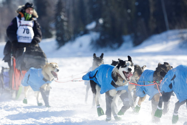 Robert Redington, a rookie, competes in the official restart of the Iditarod, a nearly 1,000 mile (1,610 km) sled dog race across the Alaskan wilderness, in Fairbanks, Alaska, U.S. March 6, 2017. (Photo by Nathaniel Wilder/Reuters)