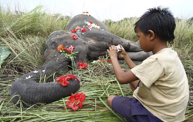 A boy uses a mobile phone to take photographs of the body of a female elephant near Panbari railway station, about 50 km (31 miles) east from Guwahati in the northeastern Indian state of Assam September 1, 2012. A female elephant died on Friday night after it was hit by a passenger train while crossing a railway track, forest officials said. (Photo by Utpal Baruah/Reuters)