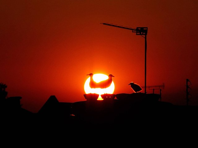 A family of seagulls are silhouetted on the rooftops of Peckham as the sun goes down on June 21, 2014 in London, England. The UK is enjoying a hot start to the summer and forecasters have predicted that the first week of Wimbledon will be dry and fine. (Photo by Mary Turner/Getty Images)
