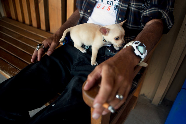 Local Charles Boyles watches the traffic along Main Street in downtown Custer with his dog Buddy during the annual  Sturgis Motorcycle Rally in South Dakota on August 3, 2015. (Photo by Kristina Barker/Reuters)