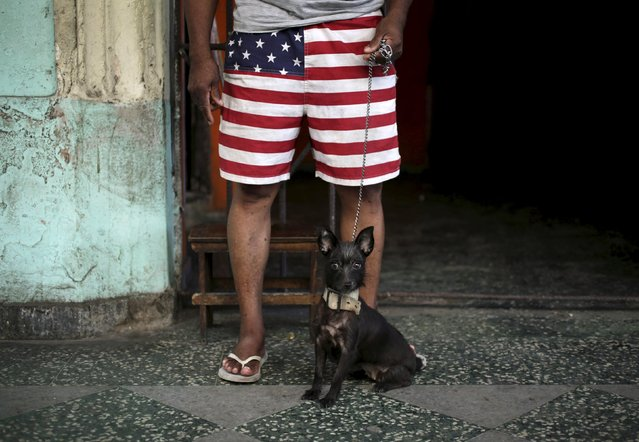 Lulu sits near his owner who is wearing short pants with the colors of the U.S. flag, in Havana August 1, 2015. Democratic presidential candidate Hillary Clinton on Friday called for Congress to end the longstanding U.S. trade embargo against Cuba and said she would make it easier for Americans to travel to the Communist-ruled island if she were president. (Photo by Enrique de la Osa/Reuters)