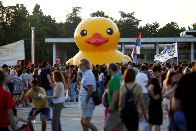 Protesters with flags walk past a rubber duck, which is a symbol of protest against the Belgrade Waterfront project, in Belgrade, Serbia, June 25, 2016. (Photo by Djordje Kojadinovic/Reuters)