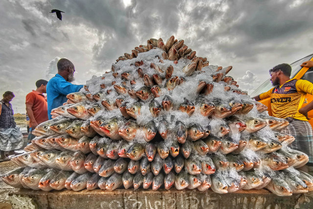 On the phone – Fishes of Hilsa by Azim Khan Ronnie. (Photo by Azim Khan Ronnie/Pink Lady Food Photographer Award 2020)