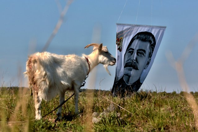 Russian Boxing Federation lifts a portrait of late Soviet leader Joseph Stalin with a hot air balloon, close to city of Belogorsk outside Simferopol, Crimea, on May 11, 2020, to mark the 75th anniversary of the end of World War II also called the Great Patriotic War, amid the coronavirus (COVID) pandemic. (Photo by AFP Photo/Stringer)