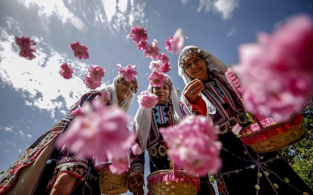 Women, with traditional clothes, collect rose petals at a rose field during rose harvesting season in Isparta, Turkey on June 17, 2020. The collected roses are exported to world wide known perfume factories, especially French companies, after the some process at the factories. Women wear traditional clothes to promote rose harvest with the support of Isparta Municipality. (Photo by Mustafa Ciftci/Anadolu Agency via Getty Images)