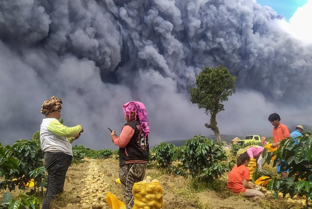 Locals harvest their potatoes as Mount Sinabung spews volcanic ash in Karo, North Sumatra province, Indonesia on August 10, 2020. (Photo by Sastrawan Ginting/Antara Foto via Reuters)