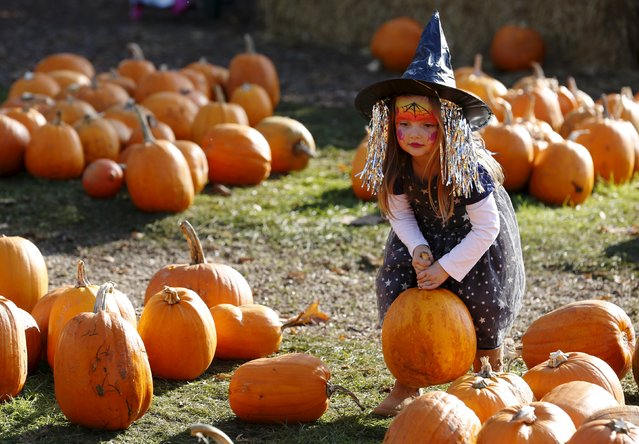 Dressed as a witch, Maisy Thompson plays with pumpkins in the pumpkin patch, ahead of Halloween at Crockford Bridge Farm at Addlestone near Woking, southern Britain October 26, 2015. (Photo by Luke MacGregor/Reuters)