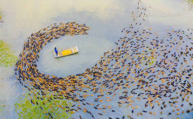 Aerial view of a farmer feeding ducks at a farm on November 6, 2020 in Sihong County, Jiangsu Province of China. (Photo by Zhang Lianhua/VCG via Getty Images)