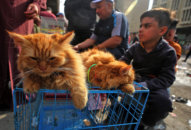 An Iraqi boy sits next to cats for sale at the Ghazl Market in central Baghdad on November 20, 2020. (Photo by Ahmad Al-Rubaye/AFP Photo)