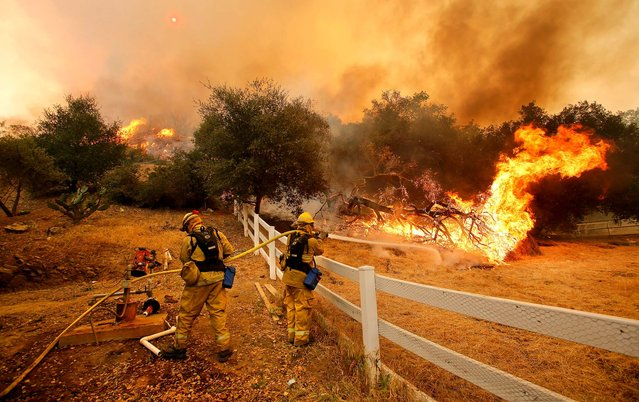 Ffirefighters from Stockton put out flames in Hidden Valley. A huge Southern California wildfire burned through coastal wilderness to the beach on Friday then stormed back through canyons toward inland neighborhoods when winds reversed direction. (Photo by  Mel Melcon/Los Angeles Times)
