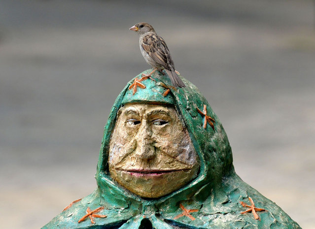 "A sparrow stands on the top of a decorative sculpture ""Babushka sitting on a bench"" set in one of parks of  Kiev, on June 13, 2013. (Photo by Sergei Supinsky/AFP Photo)"