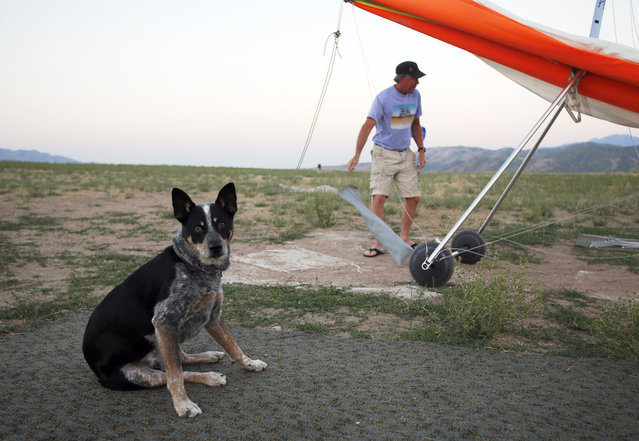 Dan McManus prepares his hang glider as his service dog Shadow waits to fly outside Salt Lake City, Utah, July 22, 2013. (Photo by Jim Urquhart/Reuters)