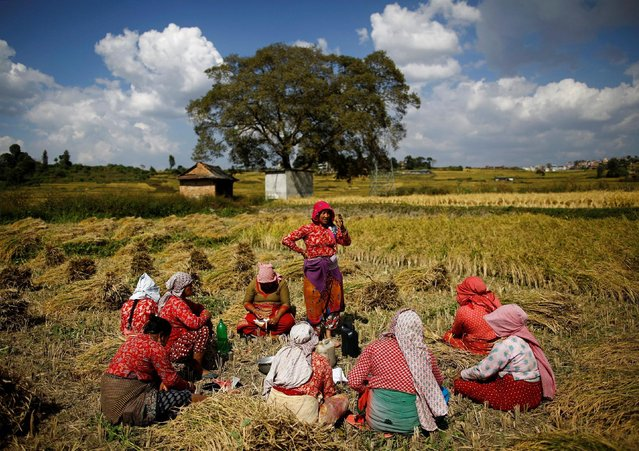 Farmers have lunch as they take a break from harvesting rice on a field in Lalitpur, Nepal October 26, 2016. (Photo by Navesh Chitrakar/Reuters)