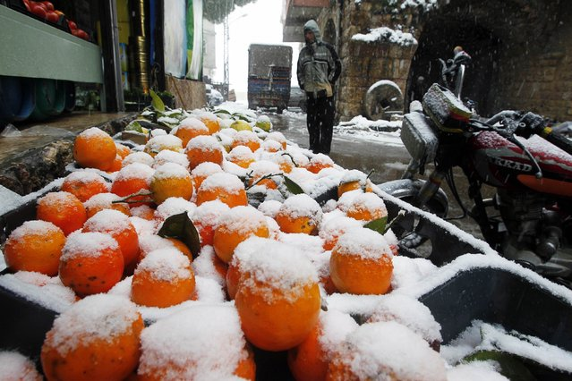 Snow covered citrus fruits are displayed for sale in Jbaa village, south Lebanon February 20, 2015. (Photo by Ali Hashisho/Reuters)