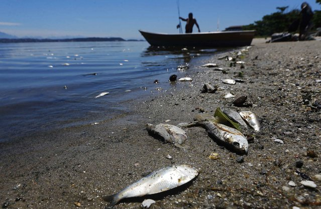 A fisherman prepares his boat next to dead fish on the banks of the Guanabara Bay in Rio de Janeiro February 24, 2015. (Photo by Ricardo Moraes/Reuters)