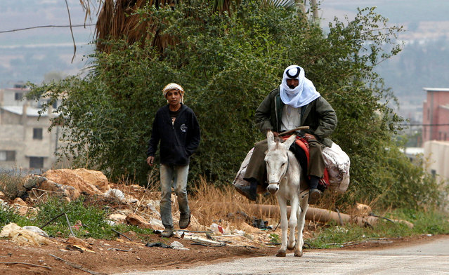 A Palestinian man rides his donkey after working in his field in the West Bank village of Nassariya near Nablus November 30, 2016. (Photo by Abed Omar Qusini/Reuters)