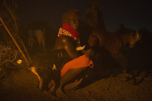 A Turkana woman poses for a photograph as she milks her goats the end of the day in her family's cattle kraal in the disputed area of the Ilemi triangle in northwestern Kenya near the borders with Ethiopia and South Sudan October 14, 2013. (Photo by Siegfried Modola/Reuters)
