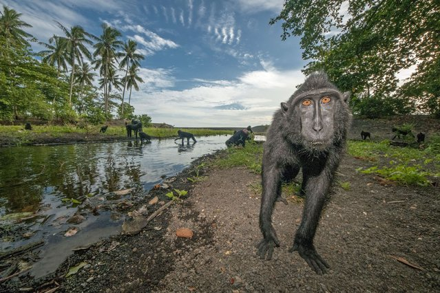 These cheeky monkeys appear to be posing for a series of holiday snaps in a bid to escape the January blues. (Photo by Caters News)