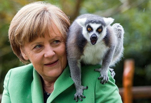 German Chancellor Angela Merkel feeds a lemur during a visit to Vogelpark Marlow (Bird Park Marlow) in Marlow, Germany, April 30, 2015. Merkel officially opened the 1.600 sqm penguin facility that will house 32 penguins, nine brown pelican and 40 Inca tern. (Photo by Jens Buettner/EPA)