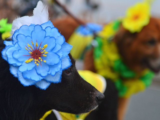 "Dogs dressed in flowers in Brazil's national colours, attend the animals' carnival parade ""Blocao"" at Copacabana in Rio de Janeiro. (Photo by Christophe Simon/AFP Photo)"