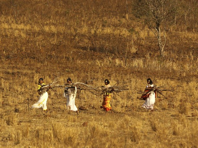 Women of Dongria tribe carry firewood as they arrive for the two-day long Niyamraja Festival atop the Niyamgiri hills near Lanjigarh in Kalahandi district, Orissa state. (Photo by Biswaranjan Rout/AP Photo)