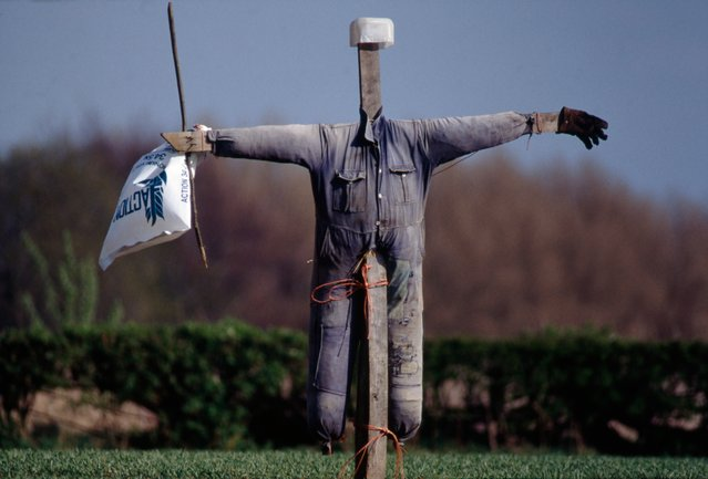 """The variety of scarecrows is infinite and all have their character. Some stand stiff, others are a ripple of movement. Some are rooted into the ground like trees, while others stride across the fields waving flags"". (Photo by Colin Garratt)"