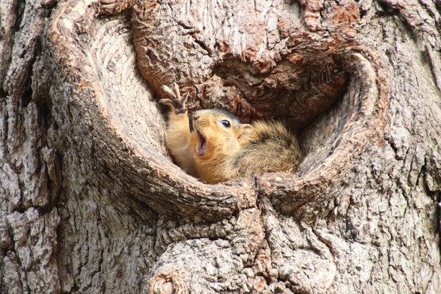 """Who would like a peanut?"". (Photo by Corey Seeman/Comedy Wildlife Photo Awards 2019)"