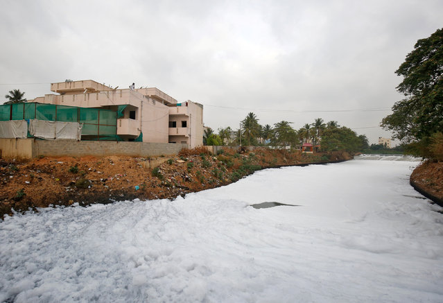 A resident looks at toxic froth floating on the polluted Bellandur Lake in Bengaluru, April 20, 2017. (Photo by Abhishek N. Chinnappa/Reuters)