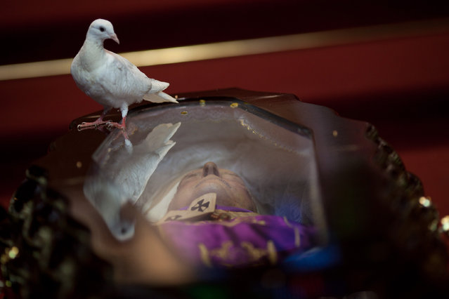 A dove perches on the glass top coffin of Brazilian Cardinal Eugenio Sales, during his funeral in Rio de Janeiro, Brazil, Tuesday, July  10, 2012. (Photo by Felipe Dana/AP Photo)