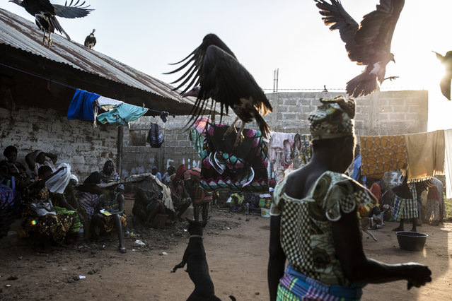 Hooded vultures are chased away by a dog as they look for scraps after a family slaughtered a cow at a funeral celebration in Bissau on November 26, 2019. Tens of thousands of Hooded Vultures flock to the city of Bissau to in search of food left behind in heaps of garbage or around market areas. (Photo by John Wessels/AFP Photo)