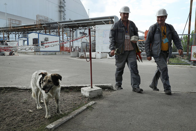 "Workers walk past a tagged, stray dog inside the high-security ""local zone"" outside the new, giant enclosure that covers devastated reactor number four at the Chernobyl nuclear power plant on August 18, 2017 near Chornobyl, Ukraine. (Photo by Sean Gallup/Getty Images)"