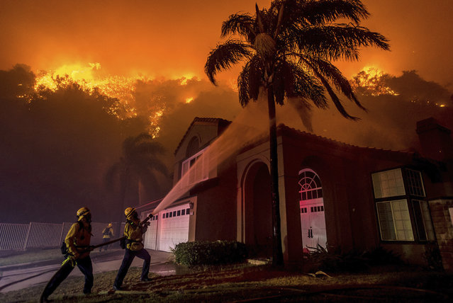 Firefighters battle to save homes as Canyon fire continues to burn in 4200 block of San Ramon Drive in Corona, Calif., Monday, September 25, 2017. (Photo by Watchara Phomicinda/The Orange County Register via AP Photo)